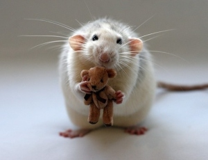 cute furry mouse with bear