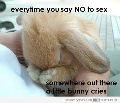 say no to sex a bunny cries