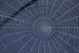 spiderweb blue
